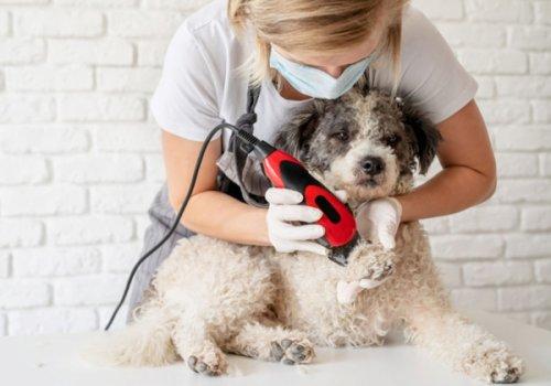 """CNA-SHV scrive al presidente della Provincia: """"Riaprire le toelettature per animali anche in zona rossa. Attività sicura. Appuntamenti e zero contagi"""""""